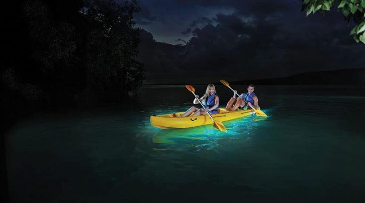 Image result for bioluminescent kayaking istock